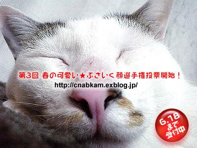a0028451_1593637.jpg