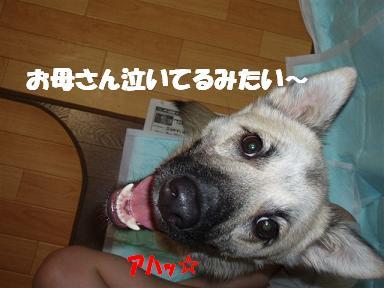 c0000189_16301178.jpg