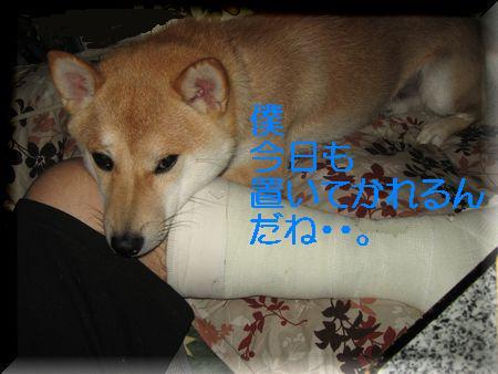 e0085147_0133434.jpg