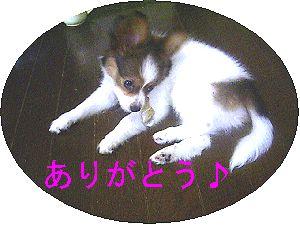 e0010488_15213019.jpg