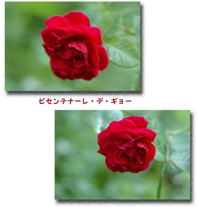 a0073275_123057.jpg