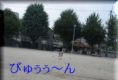 e0085147_1193049.jpg