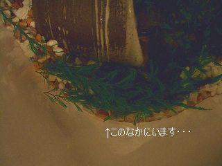 a0063116_16444595.jpg