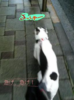 a0052736_13171813.jpg