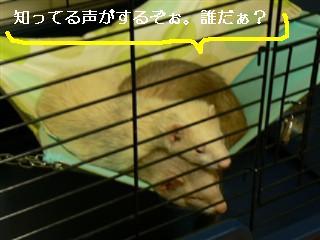 a0078652_2123378.jpg