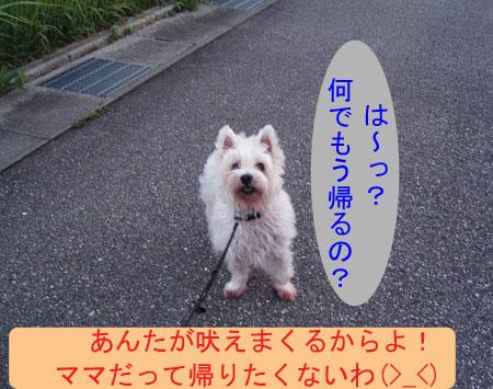 e0066883_1918105.jpg