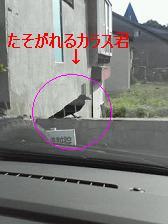 a0052753_284970.jpg