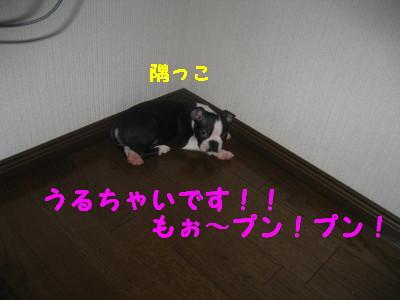 c0092787_1532619.jpg