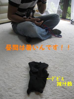 c0092787_1652680.jpg