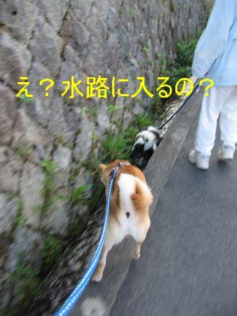 e0085147_010152.jpg