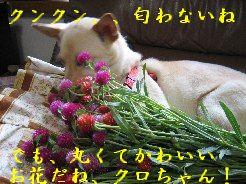 e0082045_19223064.jpg