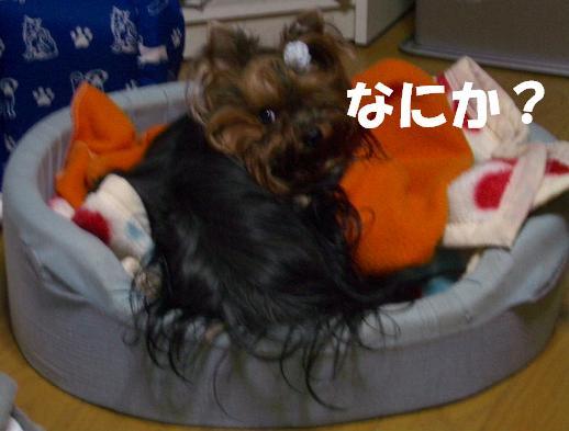 c0031582_20255642.jpg