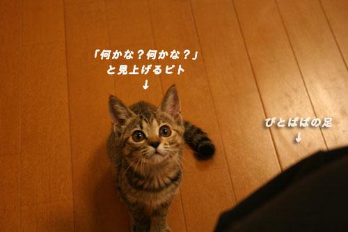 c0094821_22481843.jpg