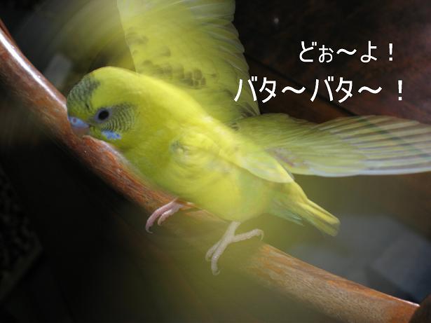 e0027078_1671863.jpg