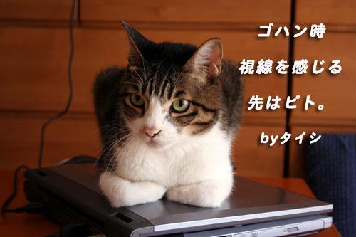 c0094821_042159.jpg