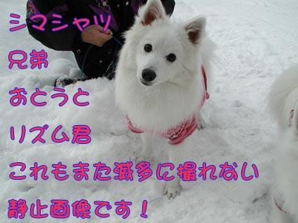 c0105157_1455311.jpg