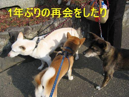 e0085147_152667.jpg