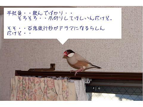 a0019545_2348571.jpg