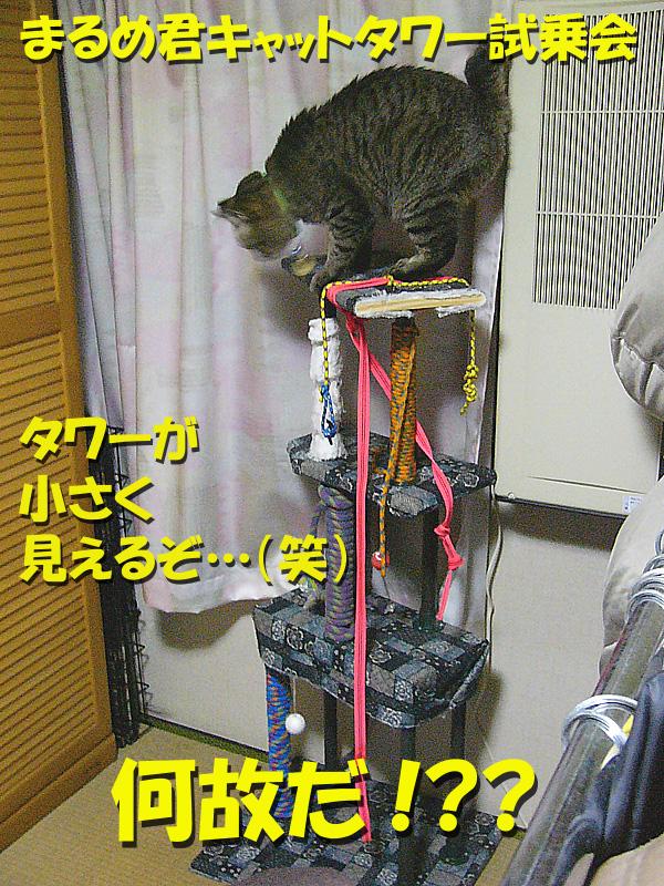 a0088031_19455997.jpg