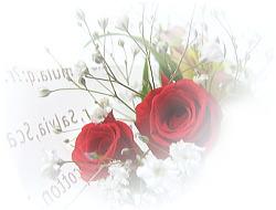 a0064213_214539.jpg