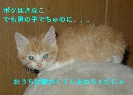 c0032073_1540374.jpg