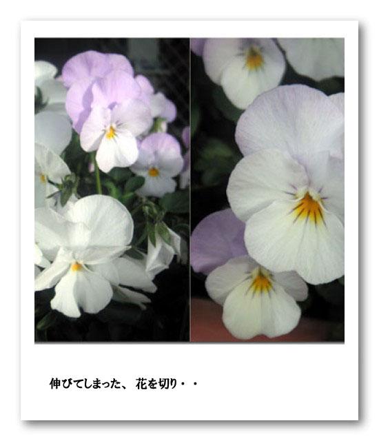 e0096955_1775016.jpg