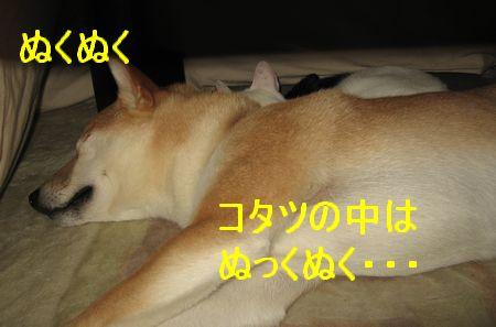 e0085147_3361972.jpg