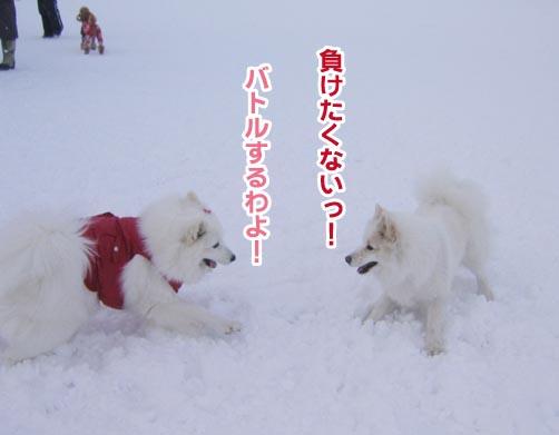 a0044521_029328.jpg