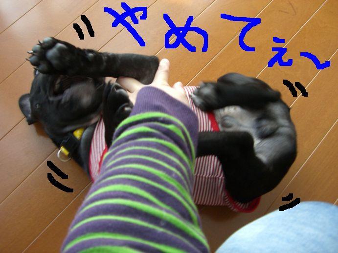 c0113109_23102691.jpg