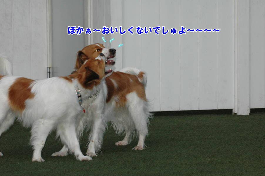 c0075585_0512529.jpg