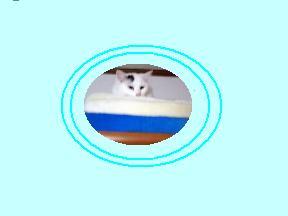 c0032073_15154551.jpg