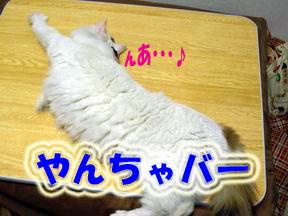 c0032073_159163.jpg