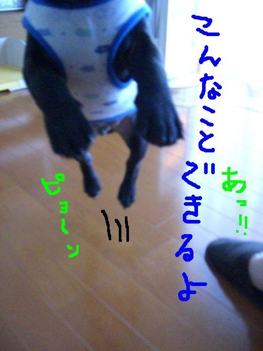 c0113109_22294847.jpg