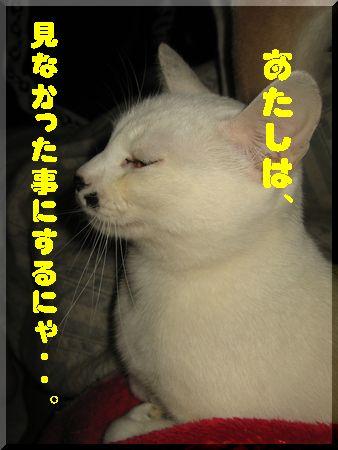 e0085147_515559.jpg
