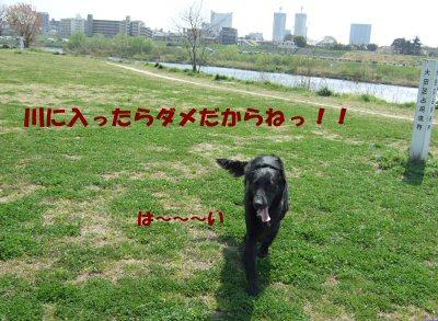 c0050400_16495590.jpg
