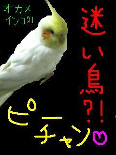 e0086589_20154883.jpg