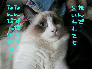 c0115211_22401770.jpg