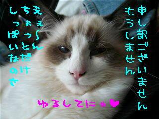 c0115211_22484772.jpg