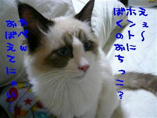 c0115211_2324395.jpg