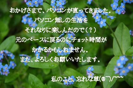 e0020954_23111856.jpg