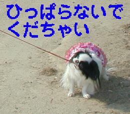 c0042081_1845122.jpg