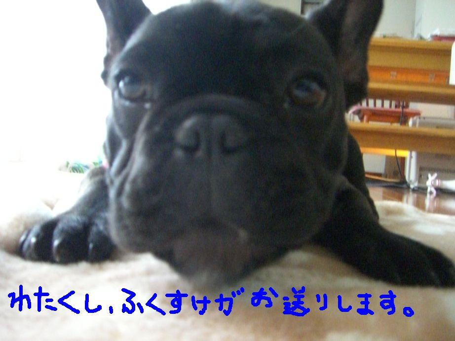 c0113109_0532175.jpg