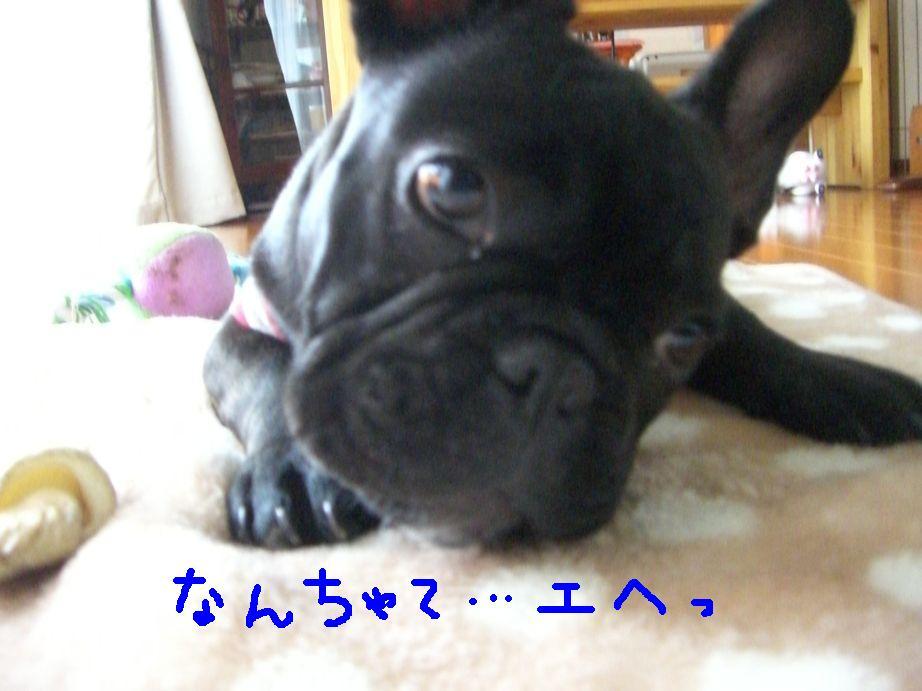 c0113109_0533666.jpg