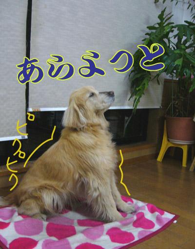 c0085188_22101132.jpg
