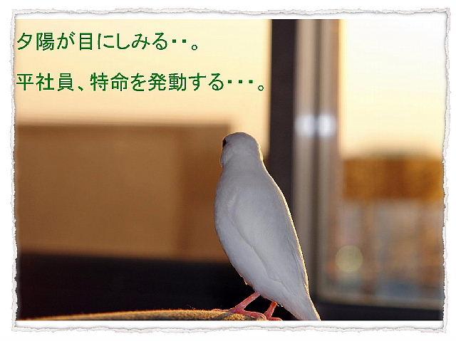 a0019545_21453951.jpg