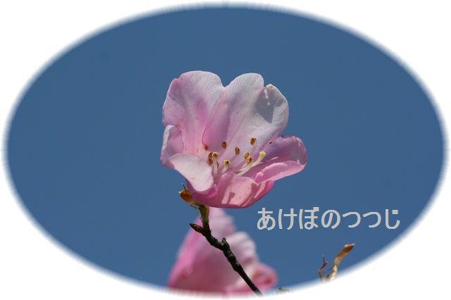 a0057905_21212632.jpg