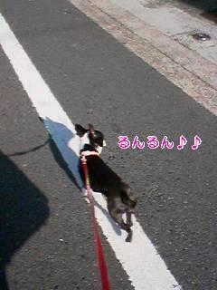 c0110945_091667.jpg