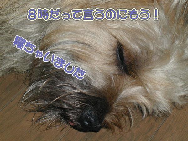 a0070477_20143351.jpg
