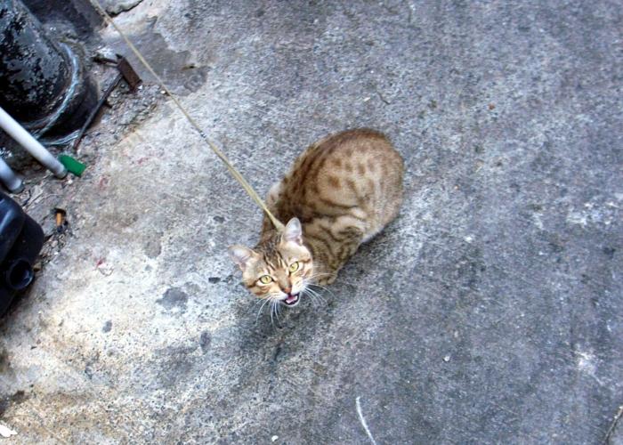 http://pds.exblog.jp/pds/1/200705/24/50/c0093750_3155958.jpg