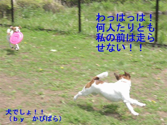 e0121589_0511328.jpg